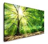 Paul Sinus Art Baum mit Sonnenstrahlen im Winter 120x 60cm Panorama Leinwand Bild XXL Format Wandbilder Wohnzimmer Wohnung Deko Kunstdrucke
