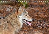 Begegnungen DER WOLF (Tischkalender 2021 DIN A5 quer)