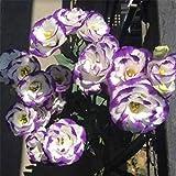 Fnho Mehrjährig Blumen,Blumensamen für Bienen,Forestray, Soße, Balkonschneideblume Topfpflanze-Lila a_500g