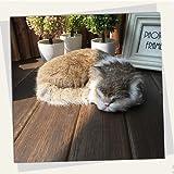 CTCABBG Realistische schlafende Katzen, Katzenplüschspielzeug, künstliche Plüschkatzen, Simulations-Requisiten für die Fotografie von Haustierkatzen (braun,21 cm x 17 cm x7cm)