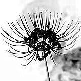 Fnho Mehrjährig Blumen,Blumensamen für Bienen,Innen- und Außenbalkon grüne Bepflanzung, Vier Jahreszeiten einfach lebende Topfpflanze-G_20 ST