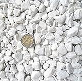 Doubleyou Geovlies & Baustoffe 5 kg Carrara Kies - Marmorkies weiß - Körnung 18-25 mm 3,99/kg.