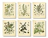 Set mit 6 Kräutern Botanischen Drucken, ungerahmt, 20,3 x 25,4 cm, matt, Thymian, Minze, Rosmarin, Petersilie, Salbei, Fenchel