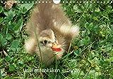 Laufentenküken - Sunny (Wandkalender 2021 DIN A4 quer)