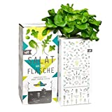 Bottlecrop - Eichblattsalat | Salat aus der Flasche | Anzuchtsystem | Urban Farming | Hydrokultur