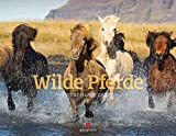 Wilde Pferde Kalender 2021, Wandkalender im Querformat (54x42 cm) - Tierkalender / Pferdekalender