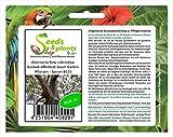 Stk - 3x Adansonia fony rubrostipa Baobab Affenbrot Baum Garten Pflanzen - Samen B516 - Seeds Plants Shop Samenbank Pfullingen Patrik Ipsa