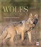 Wolfsbegegnungen: Von Wölfen in freier Wildbahn