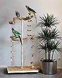 FREISITZ aus Holz Kletterbaum Papageien Freisitz 1,75 Java Tree WURZELHOLZ Papageienspielzeug