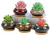 Süße Keramik-Sukkulenten-Blumentöpfe, 10 cm, Pflanzgefäß mit Drainage und angebrachtem Untersetzer, Set mit 5 Pflanzen nicht im Lieferumfang enthalten (Brenner)
