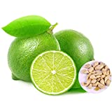 Benoon Zitronenbaum-Samen, 20 Stück Zitronenbaum-Samen, produktiv, ohne Gentechnik, lebensfähige Terrassentöpfe, Baumsämlinge für den Gartenbau, Zitronenbaumsamen