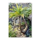 artboxONE Acrylglasbild 90x60 cm Natur Schlangenpalme Bild hinter Acrylglas - Bild teneriffa Jungle Natur