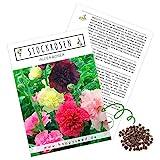 Stockrosen Samen zweijährig (Alcea Rosea) - Wunderschöne Rosen mit langer Blütezeit für besondere Akzente in Ihrem Blumenbeet (Mix)