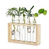 Tischplatte Hängende Glas Pflanzer Vermehrungsstation Moderne 5 Reagenzglas Blume Knospe Vase in Holz Stehen für Hydroponik Pflanzen Stecklinge Büro Home Decoration