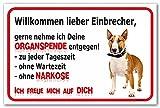 AdriLeo Schild - Vorsicht Bullterrier - Willkommen Lieber Einbrecher - (40x60cm) / Hellbraun/weiß - Achtung Hund Wachhund