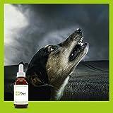 Übermäßiges Bellen - Wenn Ihr Hund übermäßig bellt, kann es schnell zum Problem werden. Probieren Sie diese Mischung aus Bachblü
