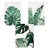Nicole Knupfer 3er Set Poster Wandbilder,Grüne Monstera Blätter Bilder,Wand Deko für Wohn-Schlafzimmer, Wandposter Posterset Ohne Rahmen (B,30x40cm)