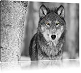 wunderschöner wachsamer Wolf schwarz/weiß Format: 120x80 auf Leinwand, XXL riesige Bilder fertig gerahmt mit Keilrahmen, Kunstdruck auf Wandbild mit Rahmen, günstiger als Gemälde oder Ölbild, kein Poster oder Plakat