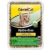 GimCat Hydro-Gras - Frisches Katzengras aus kontrolliertem Feldanbau in nur 5 bis 8 Tagen - 1 Schale (1 x 150 g)