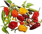 Chili Sortiment L 50 + ☆ 5 Sorten a 10 Samen ☆ -Von Klein nach Riesig über Mild zu Ultrascharf- by Samenchilishop
