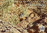 Hörnchen - neugierig, putzig, liebenswert (Tischkalender 2022 DIN A5 quer)