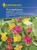 Sperli Blumensamen Wunderblume Marbles-Mix, grün