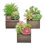 Künstliche Sukkulenten Pflanzen, Mini Assorted Green Faux Sukkulenten in Töpfen, Kleine Sukkulenten Pflanzen Künstlich mit Holz Topf für Home Office Wohnzimmer Tisch Schreibtisch Pflanzen Dekor