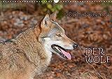 Begegnungen DER WOLF (Wandkalender 2021 DIN A3 quer)