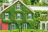 Yumhouse Winterharte Pflanzen,Trifolium repens Kriechpflanze Kriechpflanzensamen-rot_500g,Hartnäckige Pflanze