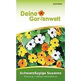 Schwarzäugige Susanne Samen | Mischung | Saatgut für Thunbergia alata | Kletterp
