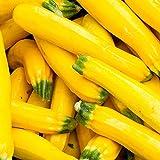 Samen für ca. 10 Pflanzen Goldena Zucchini - goldgelbe Früchte, ertragreich
