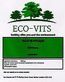 ECO-VITS Sulforaphane Brokkolismextrakt, 365 Kapseln (1000 mg) biologisch abbaubare Verpackung Versiegelter Beutel