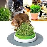 100 / 600Pcs Grassamen Hausgarten Gesunde Mehrjährige Pflanze Herb Bonsai Katzengrassamen 600 Stück