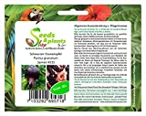 Stk - 20x Schwarzer Granatapfel Punica granatum Obst Pflanzen - Samen #315 - Seeds Plants Shop Samenbank Pfullingen Patrik Ip