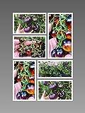 Indigo Tomaten Samen Mischung (25 Samen) von Samenchilishop