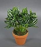 Seidenblumen Roß Zebrapflanze 28cm grün-weiß im Topf ZF Kunstpflanzen künstliche Pflanzen