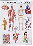 Der menschliche Körper. 70x100 cm