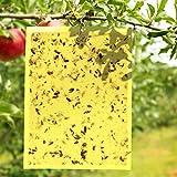 E-KNOW Fruchtfliegenfallen (40 Stück), doppelseitig, gelb, klebrige Fallen, für Küche & Pflanzen, Obstfliegenvernichter – klebrige Gnat Trap Indoor Outdoor Lösung