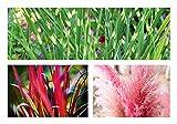 Wunderschönes Ziergras-Sortiment A 6 Töpfe ZiergräserTöpfe Pampasgras Japanisches Blutgras Zebragras