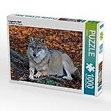CALVENDO Puzzle Liegender Wolf 1000 Teile Lege-Größe 64 x 48 cm Foto-Puzzle Bild von GUGIGEI