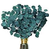 AideMeng Hochwertige Trockenblumen Eukalyptus zur Dekoration – Schleierkraut getrocknet als Kunstblume zur Verschönerung der Wohnung - Kunstpflanze in natürlicher Optik (Blaugrün)