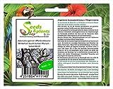 Stk - 3x Adansonia perrieri Affenbrotbäume Winterhart Baum Garten Pflanze - Samen B519 - Seeds Plants Shop Samenbank Pfullingen Patrik Ipsa