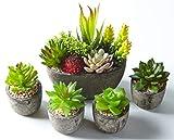 Jobary Set mit 5 künstlichen Sukkulenten mit Töpfen (einschließlich 10 Pflanzen), Bunten und Dekorativen Fälschung Sukkulentenmit Steinen, ideal für Zuhause, Büro und Dekor im Freien