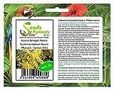 Stk - 20x Acacia Senegal Akazie Gummiarabikum Baum Pflanzen - Samen ID51 - Seeds Plants Shop Samenbank Pfullingen Patrik Ipsa