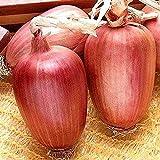 50 Stück Zwiebel Saat Gartengemüsesamen für die Gartenarbeit Nicht gentechnisch veränderte Samen sind stark und zuverlässig