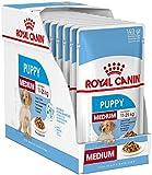 Royal Canin Medium Puppy Junior Nassfutter für Hunde, 40 Packungen à 140 g, für Welpen und junge Hunde mittlerer Rassen, 11-25 kg, bis 12 Monate