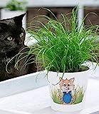 BALDUR Garten Katzengras, 1 Pflanze   fertig gewachsen   Zur Verdauungsunterstützung von Katzen   Zimmerpflanze Cyperus alternifolius