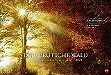 Der deutsche Wald - Ein literarischer Spaziergang - großer Foto-Wandkalender 2021 mit Zitaten deutscher Klassiker - Monatskalendarium - Format 58 x 39 cm