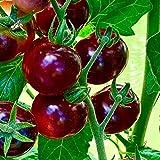 Tomate -Antho Violett/Rot- 10 Samen -Super Lecker & Süß- *Sehr Gesund*