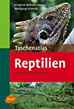 Taschenatlas Reptilien: 182 Arten für das Terrarium (Taschenatlanten)